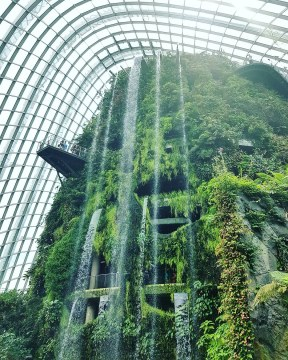 Cloud Forest, Singapore